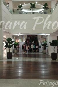 Licuala Grands palmeira Shopping Tijuca Chácara Phoenix paisagismo Milcir Filho