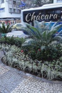 cicas circinalis ixora liriope clorofito Praça Antero de Quental Chácara Phoenix paisagismo Milcir Filho