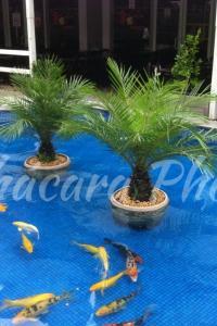palmeira phoenix Norte Shopping Chácara Phoenix paisagismo Milcir Filho